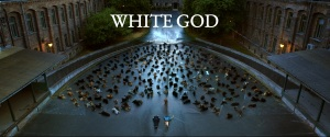 whitegod2